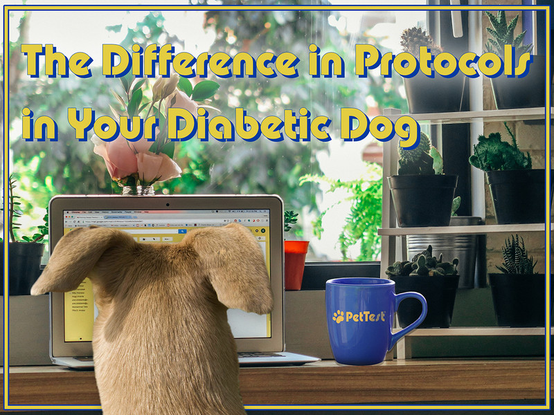 The Difference in Protocols in Your Diabetic Dog