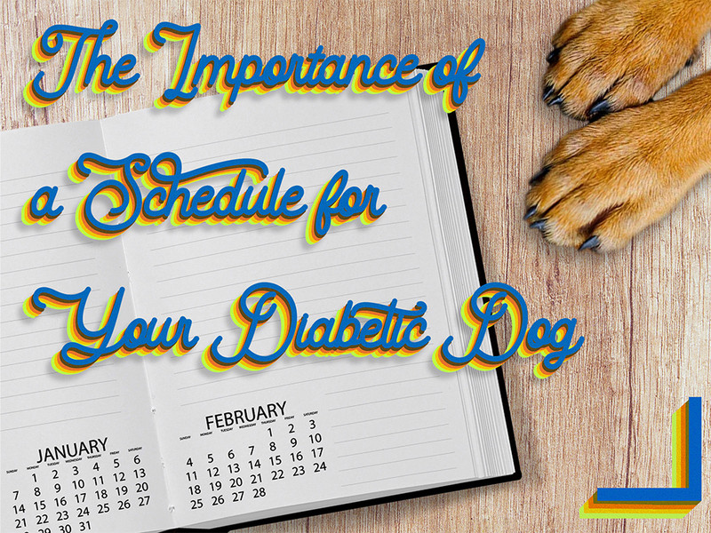 The Importance of a Schedule for Your Diabetic Dog