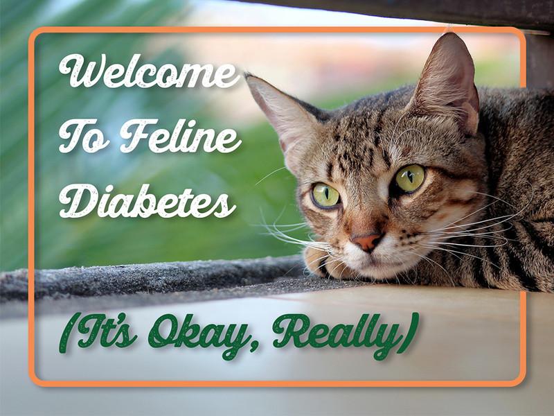 Welcome To Feline Diabetes (It's Okay, Really)