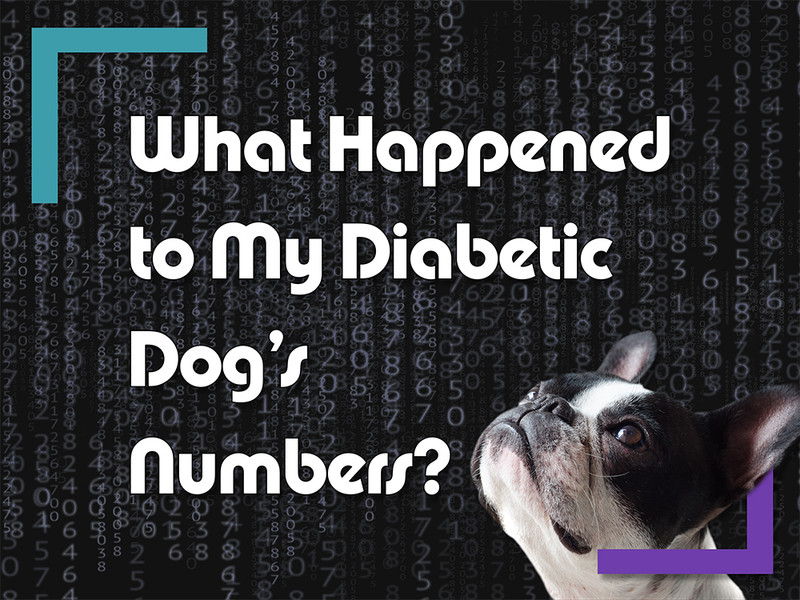What Happened to My Diabetic Dog's Numbers?