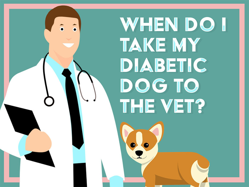 When Do I Take My Diabetic Dog to the Vet? Part 1