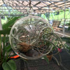 "Hanging Glass Terrarium (6"") - NEW!"
