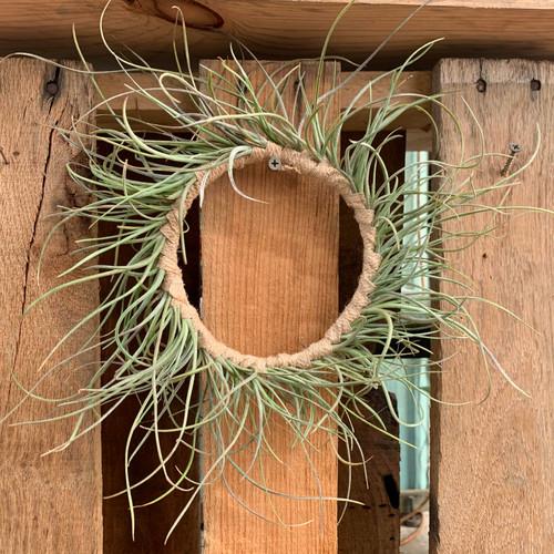 Tillandsia Wreath - NEW!