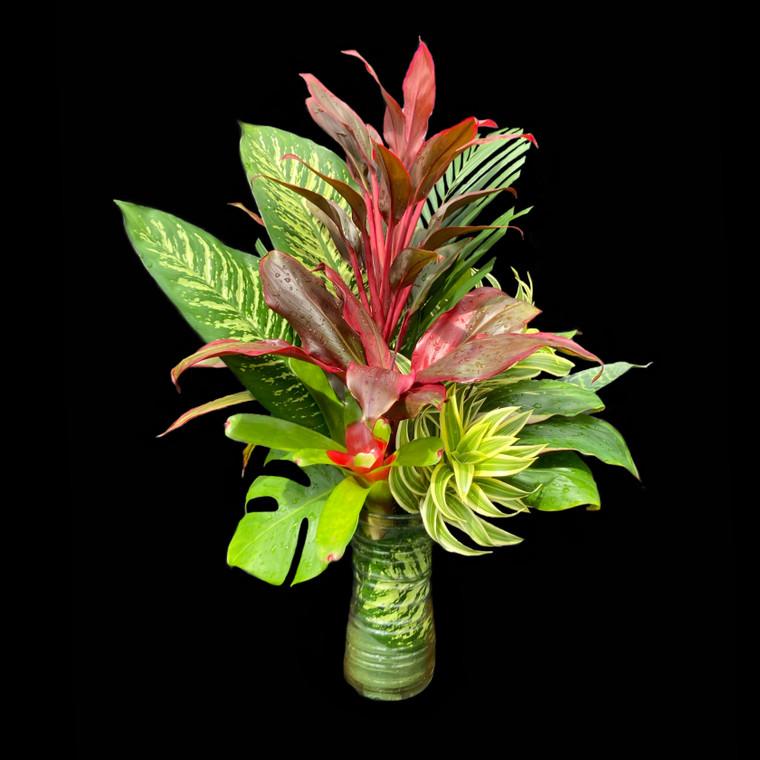 The Magical Beauty of Tropical Foliage, A Plantable Arrangement