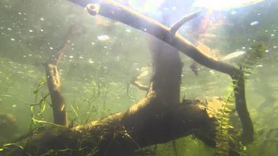 Bagley Bait Fishing Lures - Honey B