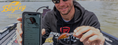 Top 5 Bagley Baits for Post Spawn Bass Fishing