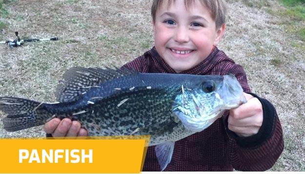 Panfish Hard baits