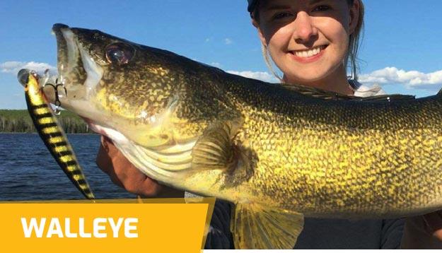 Walleye Hard baits