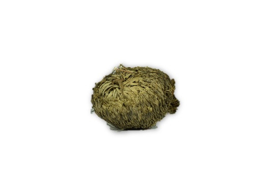 Plant of Resurrection, Rose of Jericho 1 pc. - Live house plants, Everlasting plant
