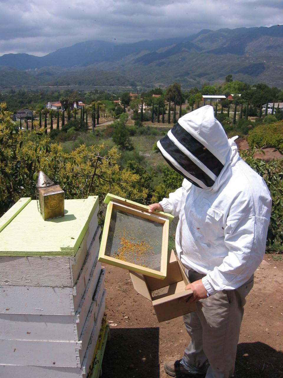 Organic Bee Pollen from North Coast California 1 pound