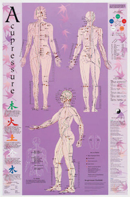 This is a large acupressure chart   showing all the Acupressure points, very nice looking and practical.       Illustrates all 12 meridians, source points, alarm points, and chi control  points with color coding.  Front, back and side views all in one chart.  Includes five element affirmations and laws.        Plus-Comes with 6-page reference containing point recipes for common complaints.