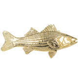 Gold Striped Bass