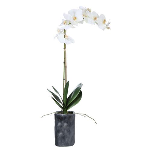 Uttermost Eponine White Orchid