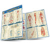 Quick Study QuickStudy Anatomy 2 Laminated Study Guide BarCharts Publishing Anatomy Reference Guide Main Image