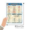 QuickStudy   Anatomy 2 Laminated Study Guide
