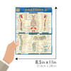 Quick Study QuickStudy Anatomy 2 Laminated Study Guide BarCharts Publishing Anatomy Reference Guide Size