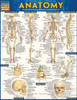 Quick Study QuickStudy Anatomy Laminated Study Guide BarCharts Publishing Anatomy Reference Guide Cover Image
