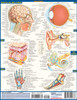 QuickStudy | Anatomy Laminated Study Guide