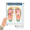 Quick Study QuickStudy Reflexology Laminated Study Guide BarCharts Publishing Medical Reference Guide Size