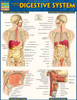 Quick Study QuickStudy Anatomy of the Digestive System Laminated Study Guide BarCharts Publishing Cover Image