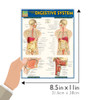 Quick Study QuickStudy Anatomy of the Digestive System Laminated Study Guide BarCharts Publishing Guide Size
