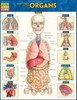Quick Study QuickStudy Anatomy of the Organs Laminated Study Guide BarCharts Publishing Medical Edu Cover Image
