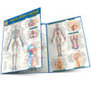 QuickStudy | Circulatory System Advanced Laminated Study Guide