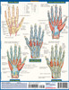 Quick Study QuickStudy The Hand Laminated Study Guide BarCharts Publishing Medical Reference Guide Back Image