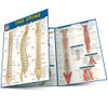 Quick Study QuickStudy The Spine Laminated Study Guide BarCharts Publishing Medical Reference Main Image