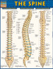 Quick Study QuickStudy The Spine Laminated Study Guide BarCharts Publishing Medical Reference Cover Image