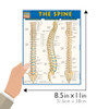 Quick Study QuickStudy The Spine Laminated Study Guide BarCharts Publishing Medical Reference Guide Size