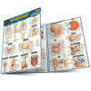 QuickStudy | Anatomy Quizzer Laminated Study Guide