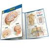 QuickStudy | Brain Laminated Study Guide