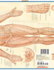 Quick Study QuickStudy Acupressure Laminated Study Guide BarCharts Publishing Acupressure Reference Back Image
