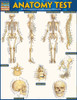 QuickStudy Quick Study Anatomy Test Laminated Study Guide Front Image