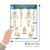 QuickStudy Quick Study Anatomy Test Laminated Study Guide Size