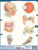 QuickStudy Quick Study Anatomy Test Laminated Study Guide Back Image