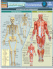 QuickStudy | Anatomy Fundamentals: Life  Science Laminated Study Guide