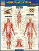QuickStudy | Muscular System Advanced Laminated Study Guide
