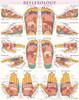 QuickStudy Reflexology Laminated Poster