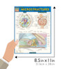 QuickStudy   Anatomy: Microstructures Laminated Study Guide