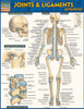 Quick Study QuickStudy Joints & Ligaments Advanced Laminated Study Guide BarCharts Publishing Guide Cover Image