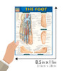 Quick Study QuickStudy The Foot Laminated Study Guide BarCharts Publishing Medical Academic Guide Guide Size