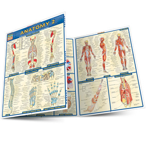 QuickStudy | Anatomy 2 Laminated Study Guide