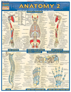 Quick Study QuickStudy Anatomy 2 Laminated Study Guide BarCharts Publishing Anatomy Reference Guide Cover Image