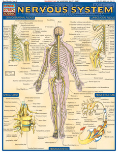 QuickStudy | Nervous System Laminated Study Guide