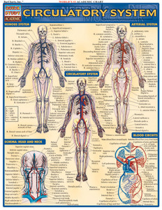 QuickStudy | Circulatory System Laminated Study Guide