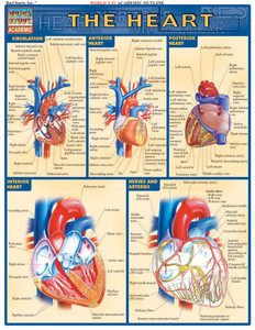 QuickStudy | The Heart Laminated Study Guide