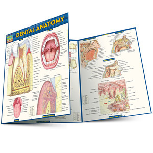 QuickStudy Quick Study Dental Anatomy Laminated Study Guide BarCharts Publishing Medical Study Guide Main Image