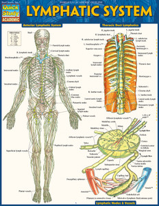 Quick Study QuickStudy Lymphatic System Laminated Study Guide BarCharts Publishing Reference Guide Cover Image